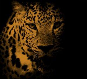 Tiger MetaliK